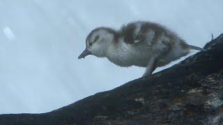 Animals VS Nature | Top 5 | BBC Earth