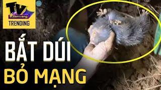 Trong khi chui vào hang BẮT DÚI người đàn ông không may bị SẬP HANG bỏ mạng
