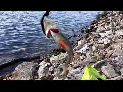 Пиявки как насадка для ловли рыбы