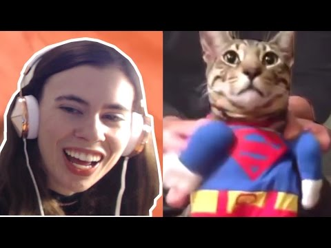 TRY NOT TO LAUGH CHALLENGE - FUNNY CATS FAILS COMPILATION - UCpGdL9Sn3Q5YWUH2DVUW1Ug