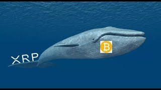 Bitcoin Whale Manipulation, Ripple And XRP
