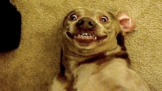 ? Funniest ? Dogs and ? Cats - Awesome Funny Pet Animals' Life Videos ?