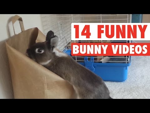 14 Funny Bunny Videos || Awesome Bunnies Compilation - UCPIvT-zcQl2H0vabdXJGcpg
