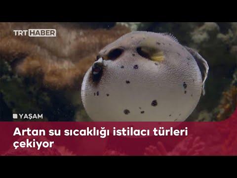 Akdeniz ekosistemi risk altında
