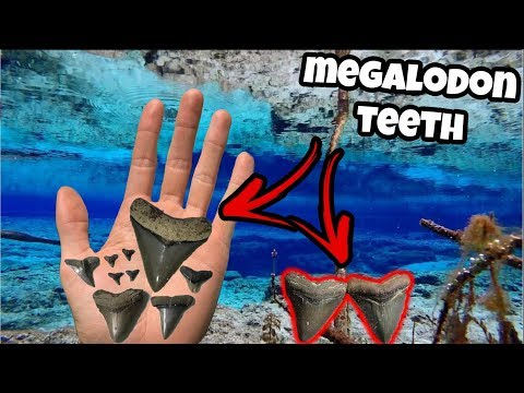 We Found GIANT Megalodon Shark Teeth In Florida!!