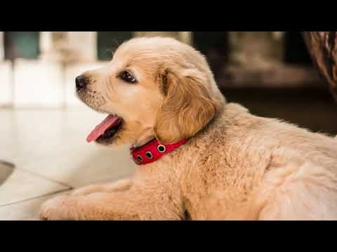 best dog food for puppies 2019 🐶 Delicious & Healthy Food For Puppy