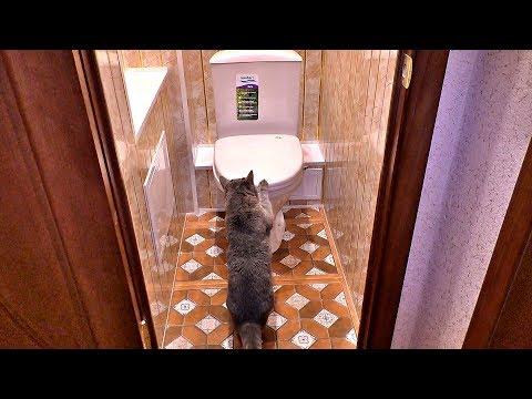 Установка дешёвого унитаза в туалете photo
