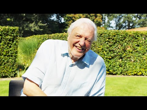 Sir David Attenborough on nature's most spectacular mating displays | The Mating Game | BBC Earth