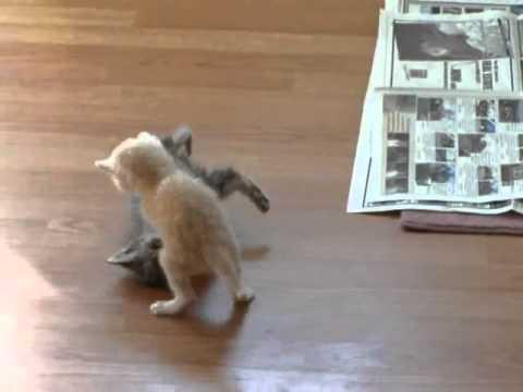Break it Up - Cute kittens fighting - UCezRMHyr8Y2eZUJ-BRqDn_A