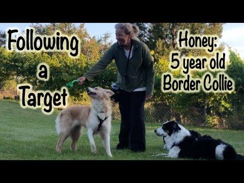 Honey: Following a Target