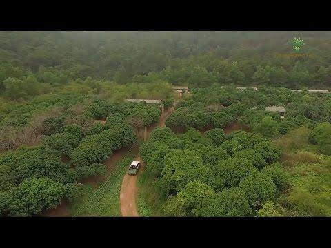 Nissan Navara đồng hành cùng chương trình Nông Nghiệp Sạch VTV1 - Số 84: Gà đồi Sóc Sơn
