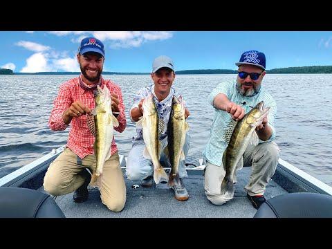 Сколько Рыбы Можно Поймать с Профессиональным Гидом. Учусь Ловить Судака