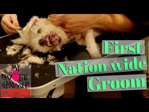 I Will Bite You (First Nation Wide Aggressive Groom)