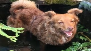 Dog chills out in water fountain after morning walk