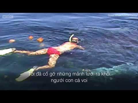 Hành động không ngờ của chú cá voi sau khi được giải cứu khỏi lưới đánh cá