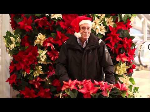 Blomsterfrämjandet firar Julstjärnans Dag 12 december 2013 på Cityterminalen.