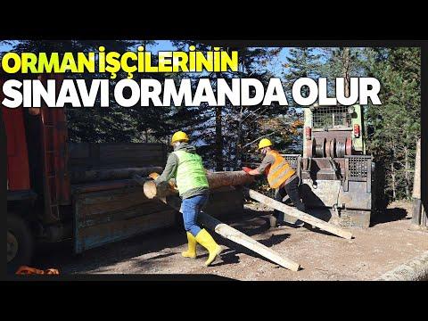 Türkiye'de Belgesiz Orman İşçisi Kalmayacak