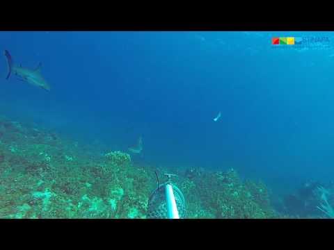 Sharks Bonaire