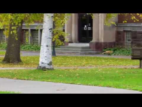 UW-Superior: Campus Fox