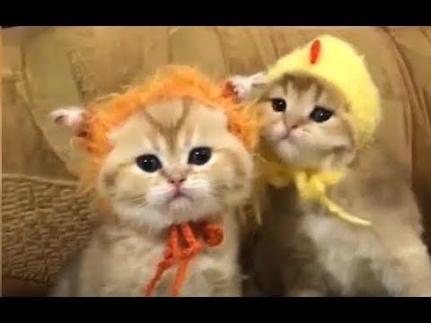 Kumpulan video kucing menggemaskan suka jail