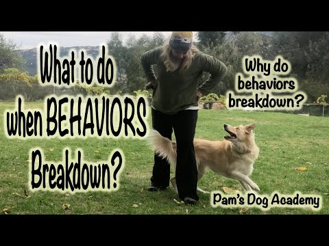 What to do when a behavior breaks down: Dog Training