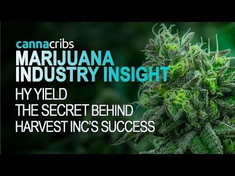 The Secret Behind Harvest Inc's Success (Marijuana Industry Insight)