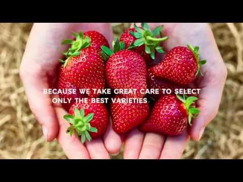 M&S   Food: Why M&S Strawberries Taste So Good