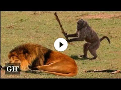 Funny Animals ; Funny video - UCDRo8lGh1_h0zP4OePU75DA