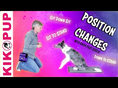 Position Changes Sit Down Stand with Back Feet Static