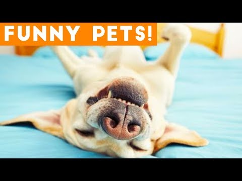 Funniest Pets & Animals of the Week Compilation September 2018 | Funny Pet Videos