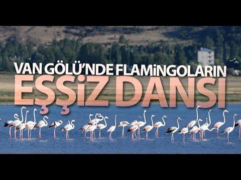 Van Gölü'nde Flamingoların Eşsiz Dansı Kamerada