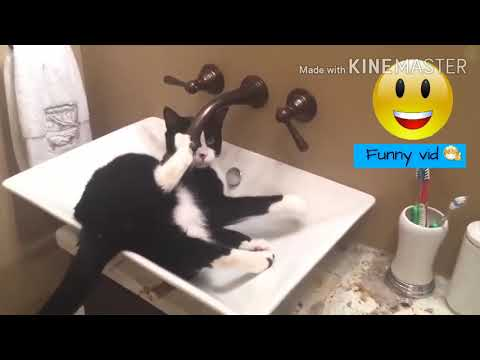 Funny Animal Fails Compilation #1