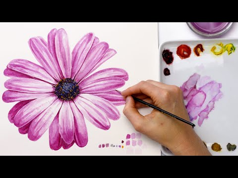 How to paint a colourful daisy flower in watercolour