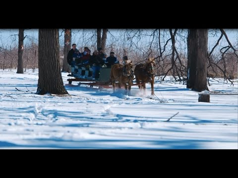 Apple Holler Horse-Drawn Sleigh Rides