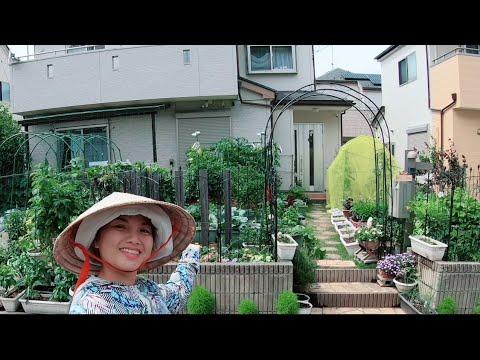 Tổng quan vườn rau mùa hè xanh mướt của tui ở Nhật là vậy đó #929