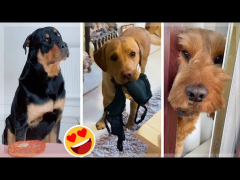 Cutest Puppies Doing Funny Things ~ Funniest Dogs!  [2021] - UCIDvgzmxcpil52HZifHHGZQ