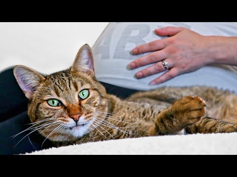 CAT REACTS TO PREGNANCY - Do Cats Reveal Baby Gender?
