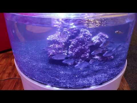 Amazing tank  Proaquatix aquacultured marine ornamentals round tank pretty cool