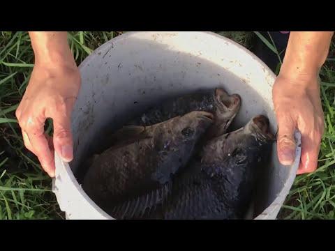 Top 5 Cast Net Fishing Big Fish! - UCg7obvx4XYBYmTkEBe2_EFQ