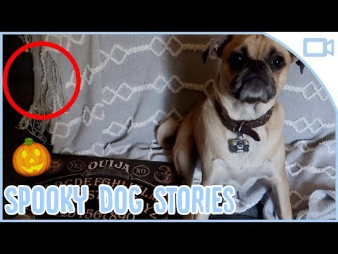 SPOOKY DOG STORIES FOR HALLOWEEN! 🎃👻🦇