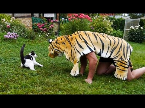 Pets Getting Scared Over Nothing - Funny Cat And Dog Videos | Pets Island - UCuPFZxpy1mV43WPkzj3cm3w