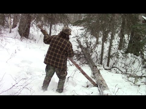 Dislodging A Leaning Tree The Bushcraft Way