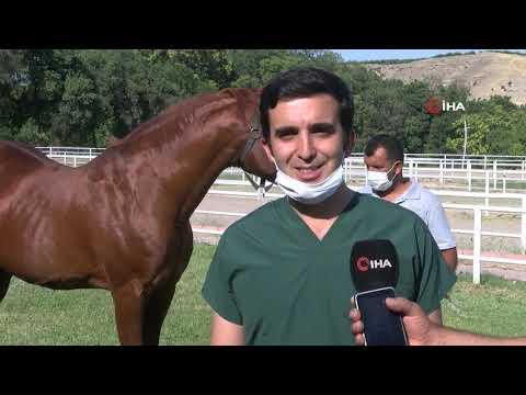 Emektar Şampiyon At 'Özgünhan' Sultansuyu Harası'nın Gözdesi