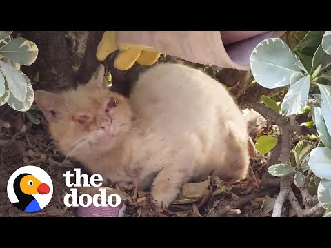 Watch This Scruffy Feral Cat Turn Into A Blue-Eyed Beauty | The Dodo Cat Crazy