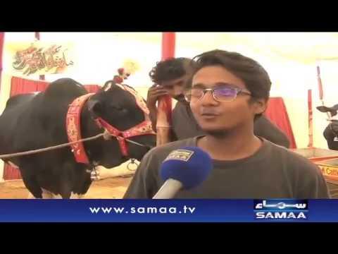 Karachi Mandi 2016 Ka Sultan
