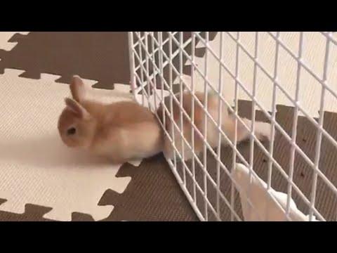 Pet Escape Artists | Funny Pet Video Compilation - UCPIvT-zcQl2H0vabdXJGcpg