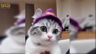 Crazy Animals Video Compilation - Funny & Cute #177