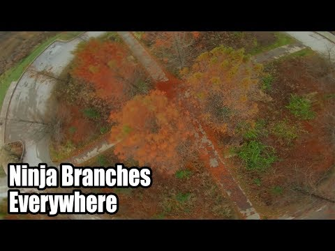 The Ninja Branches are Real // 399 SuperG - UCPCc4i_lIw-fW9oBXh6yTnw