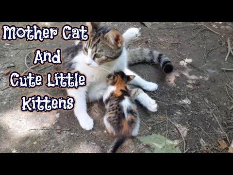 Mother Cat and Cute Little Kittens │Funny Kitten Videos - UCpF9KtOX4ctN1VeWqQUT3Rg