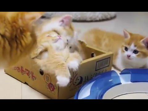 Cute Kittens Playing And Biting Till Mama Steps In | Funny Playful Kittens - UCRlukp3cFr522G1upDo43TQ